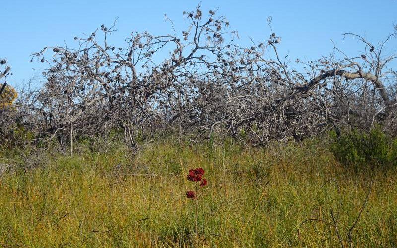 Wildflowers durante il trekking Kepwary a Esperance