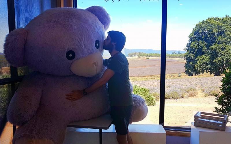 Souvenir orso profumata alla lavanda gigante della Bridestowe Lavender Estate nel Nord della Tasmania