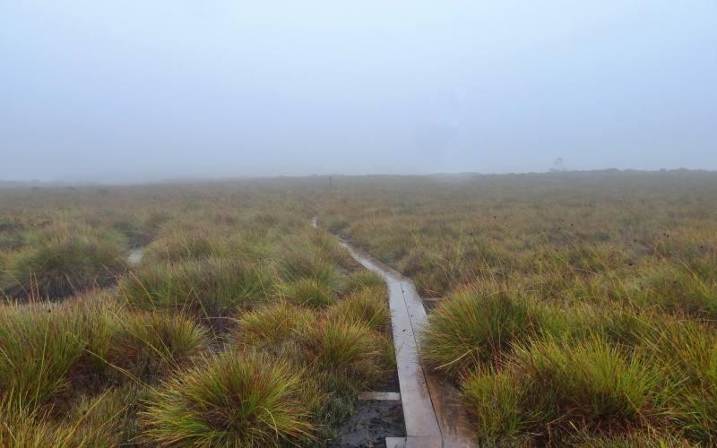 Terzo giorni di nebbia durante il nostro Overland Track in 7 giorni in Tasmania