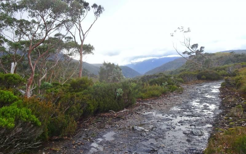 Secondo giorno del nostro Overland Track in 7 giorni in Tasmania