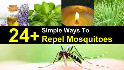 These plants will kick mosquitoes away