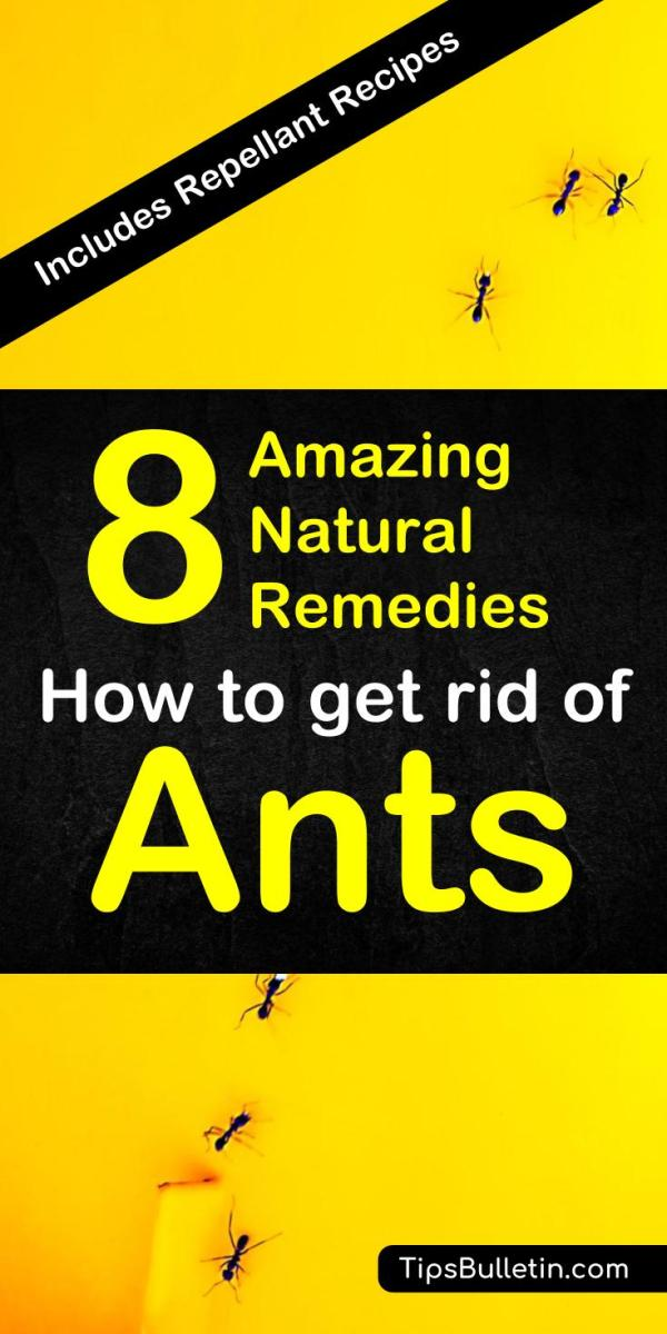 8 Natural Ant Remedies - How to Get Rid of Ants