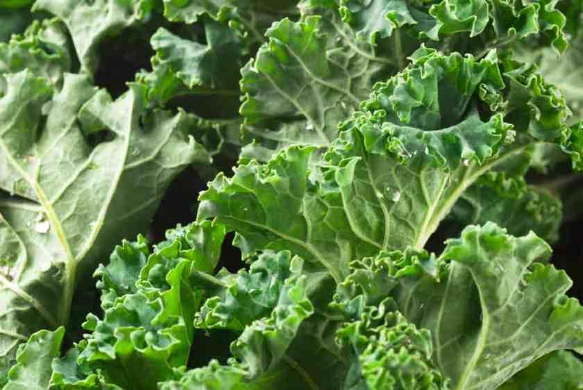 Kale - shade vegetables