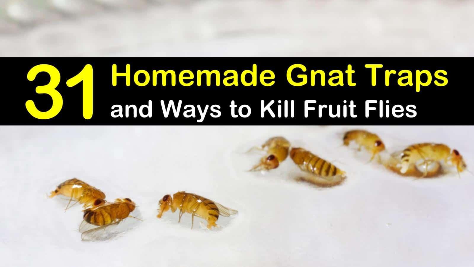 31 homemade gnat traps and ways to kill