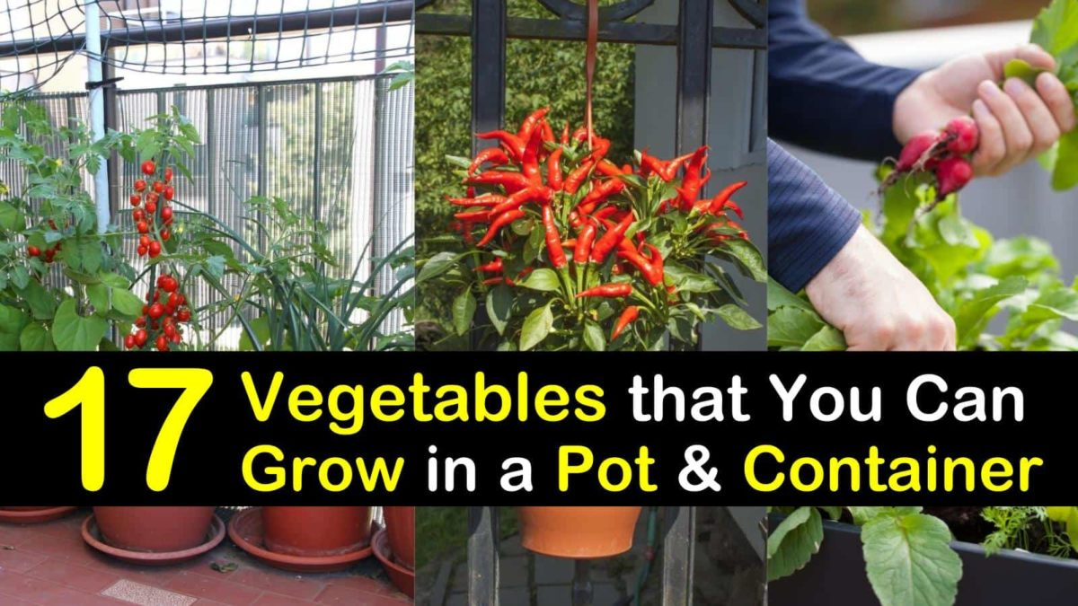 container vegetable gardening t1