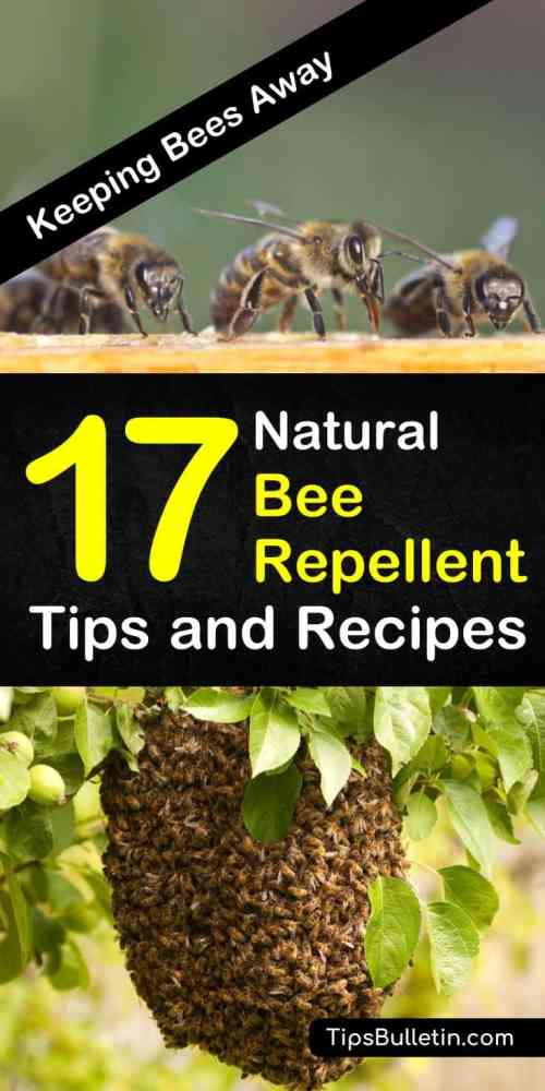 Learn how to get rid of bees from your house, yards, and outdoor entertainment areas with these natural bee repellent recipes. Whether you need relief while camping or you're looking for a natural spray for your skin, these tips can help! #beerepellent #bees #pestcontrol