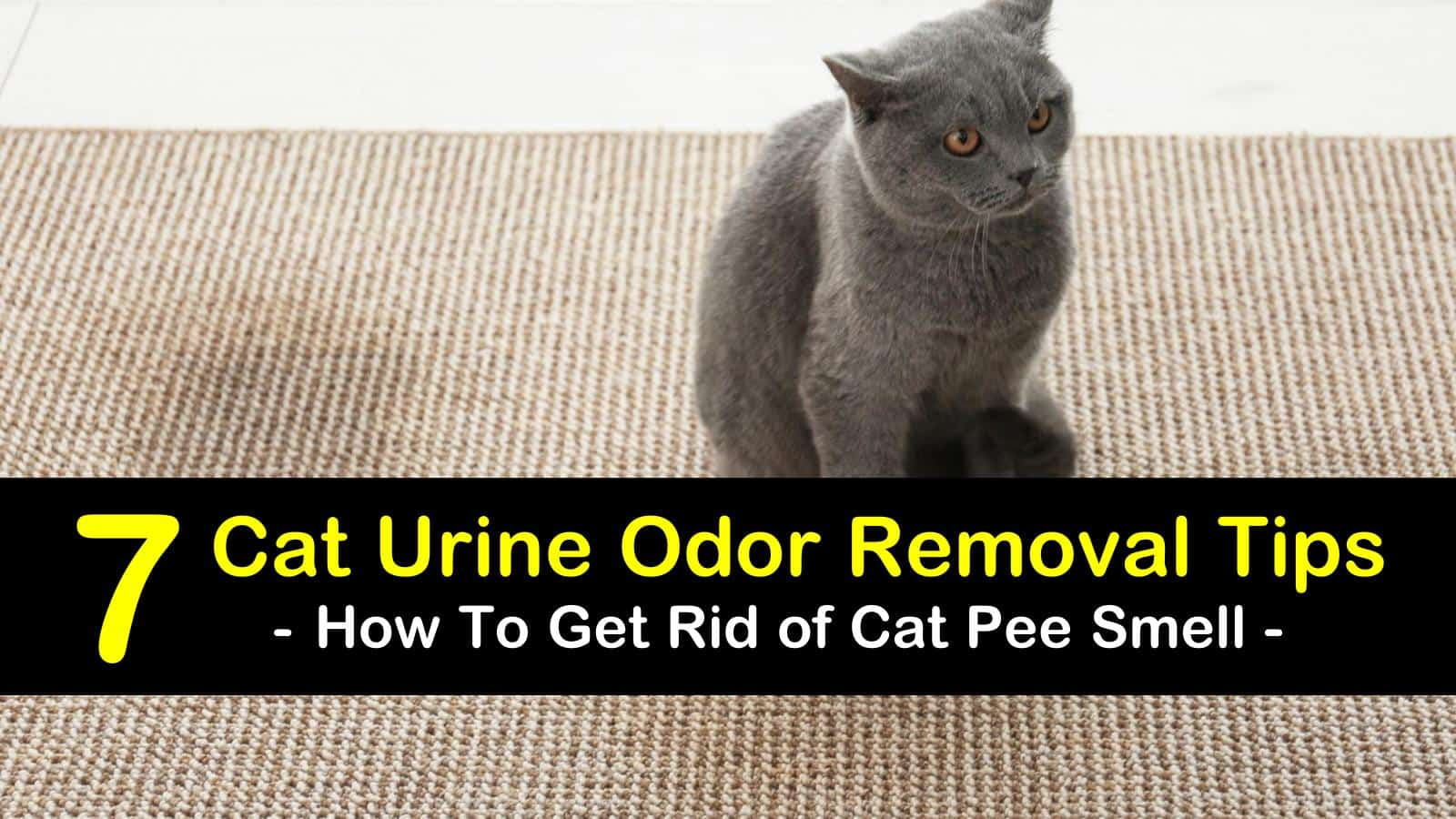 7 simple ways to get rid of cat pee smell