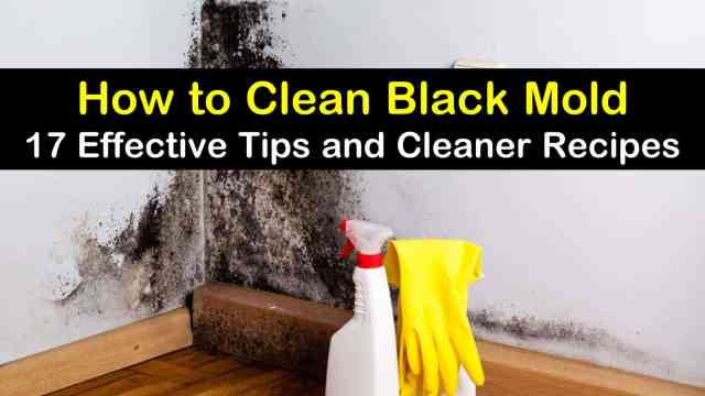 6 Effective Ways to Clean Black Mold