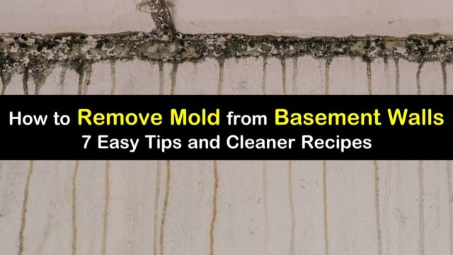 18 Quick Ways to Remove Mold from Basement Walls