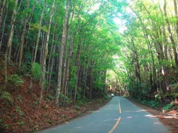 Mahogany man made forest Bohol