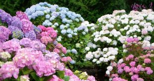 Perennial Plants to Grow