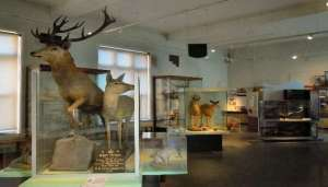 International Museum