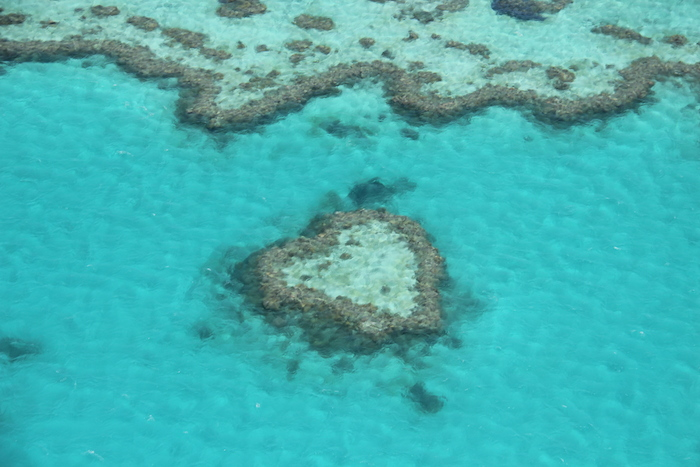 Heart-shaped coral formation in the Great Barrier Reef