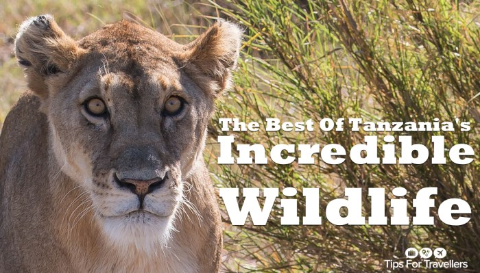 See the incredible wildlife of Tanzania