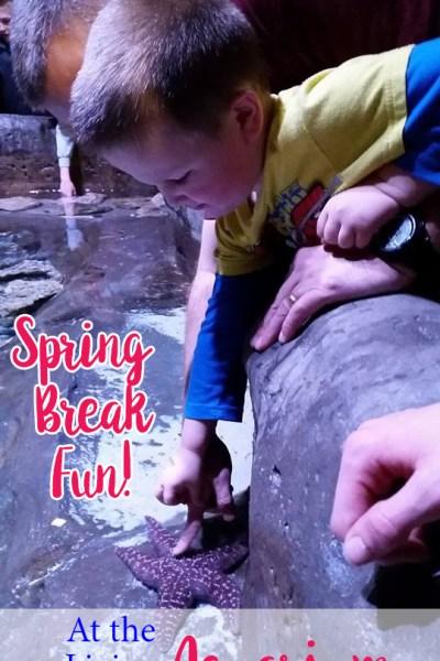 Loveland Living Planet Aquarium {Spring Break Utah Family Activity}