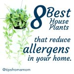 8 House Plants that reduce allergens in your home.