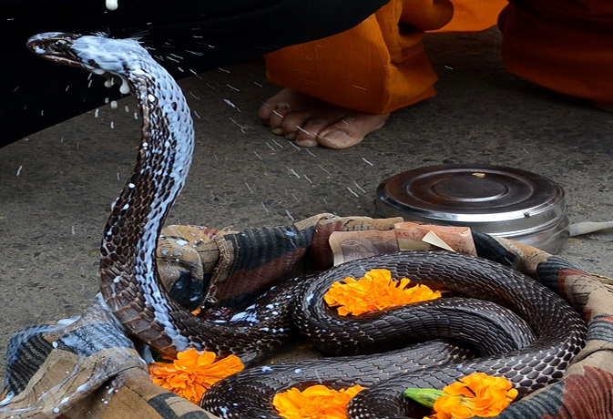 Naag Panchami: 3 Faq's for The Sacred Day of the Serpents