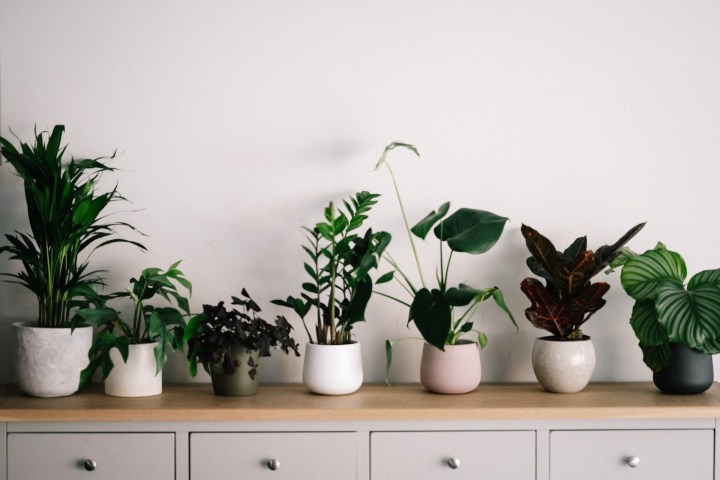 Top 10 Indoor Plants and Simple Ways to take care of them