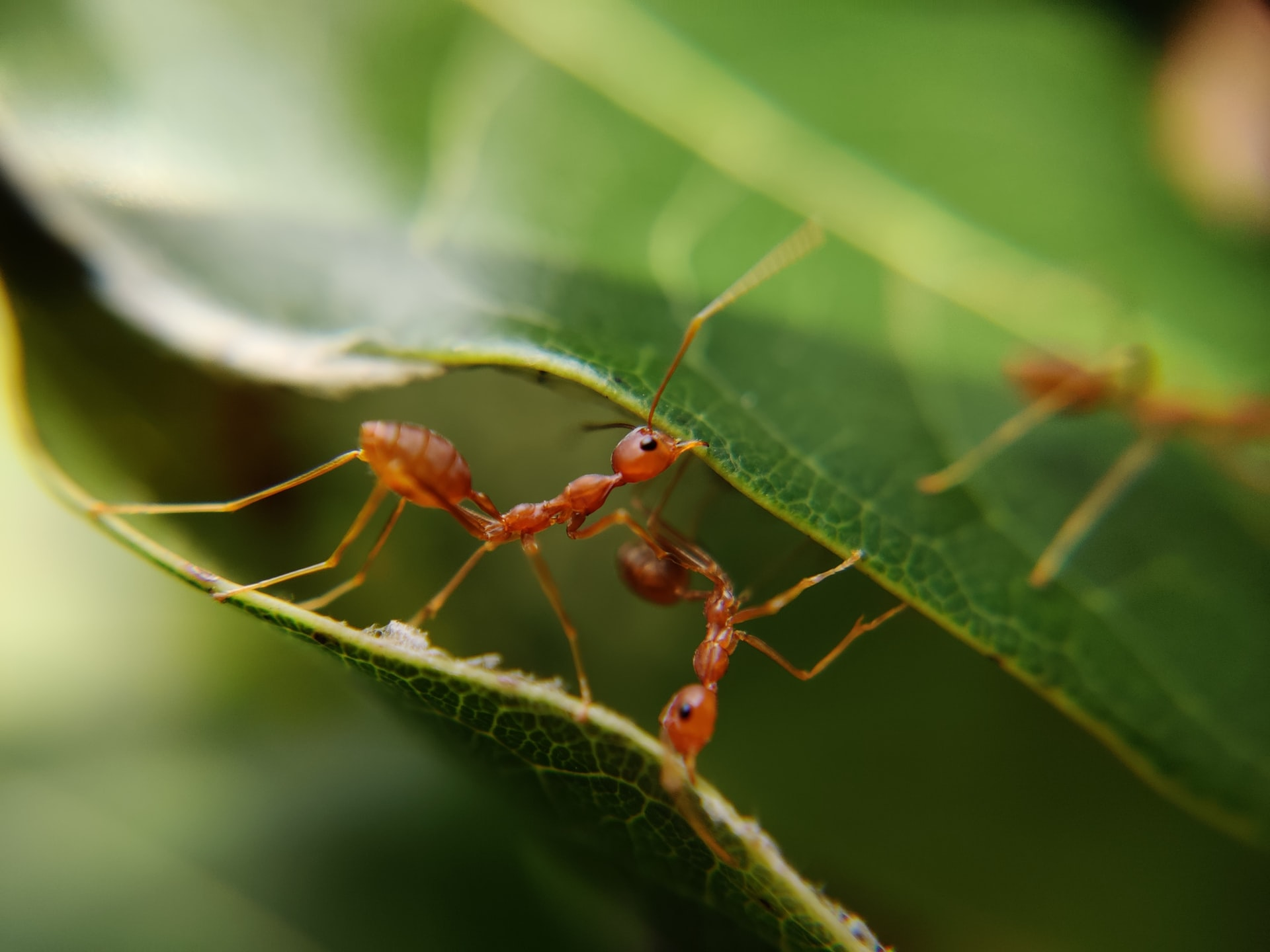 11 Easy Steps To Get Rid Of Ants In Your House