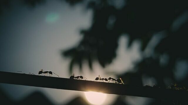 Get Rid of Ants in your House with these 11 Easy Steps!