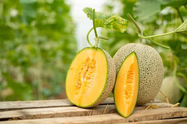 This image has an empty alt attribute; its file name is 12-grandes-beneficios-y-propiedades-del-melon.jpg