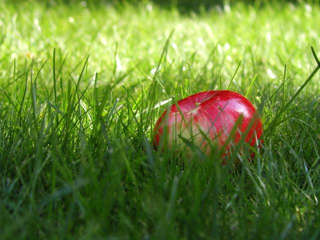 Ilustrasi Rumput | Img:freeimages.com