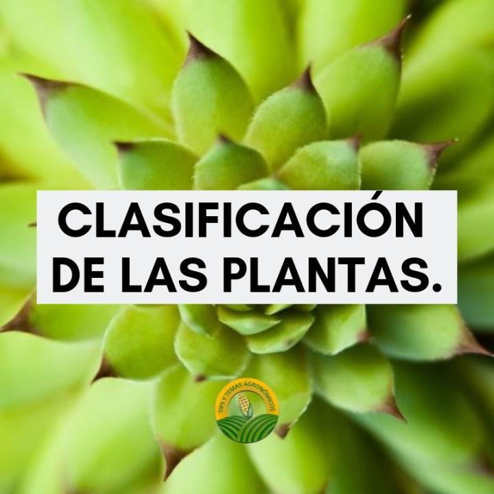 Clasificación de las plantas .