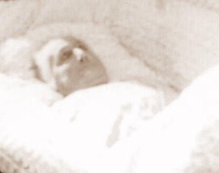 Susan Ann Lumpkin in Casket