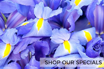 Shop Our Specials