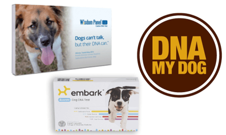 Embark vs Wisdom Panel vs DNA MY DOG – Which is the Best Dog DNA Test?