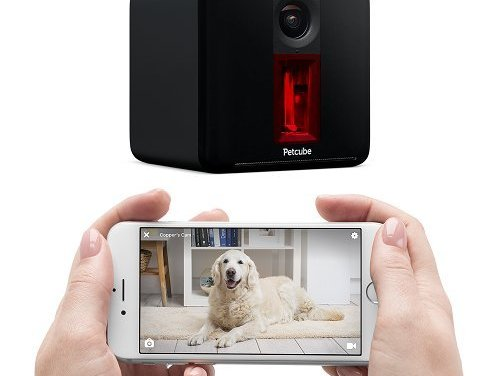 PetCube Review | PetCube Play Remote Wifi Pet Camera