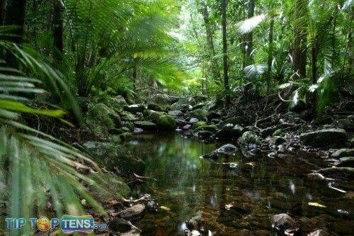 daintree forest Top 10 Biggest and Popular Rainforests in The World