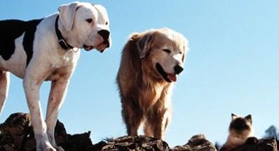 hewan terpopuler dalam film