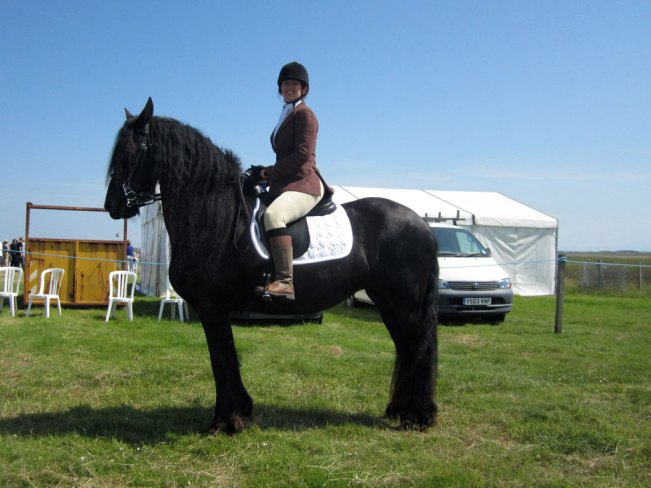 champion horse at Tiree Show 2014