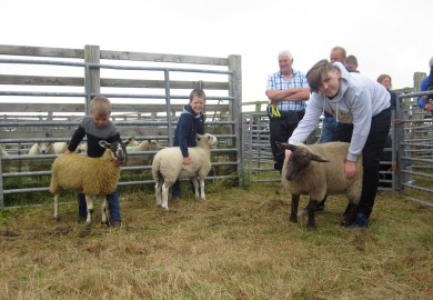 Sheep Young Handlers