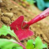 five tips to maintain your garden