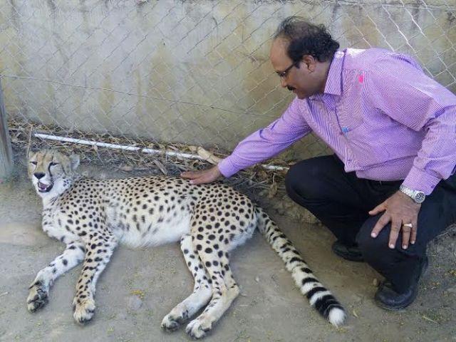 Sir With Cheetah