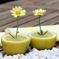 Zitronendeko