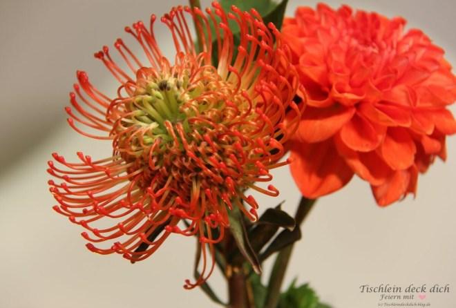 Dahlien und Nadelkissen Protea für die herbstliche Tischdekoration