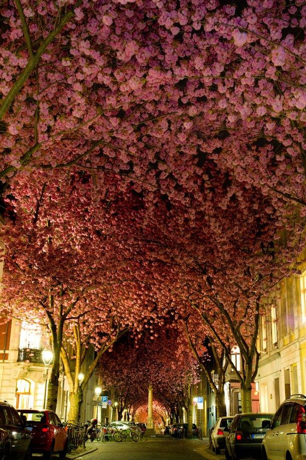 Street in Bonn - Imgur