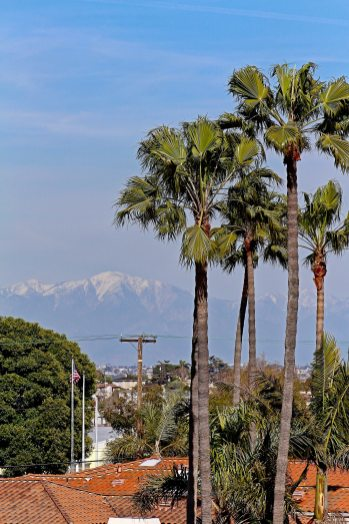 Caskey - 733 12th_View to Mt Baldy-Palm Trees