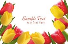 Valentine's Day Tulip Vector 04