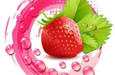 100 Natural Strawberry Vector Illustration 02