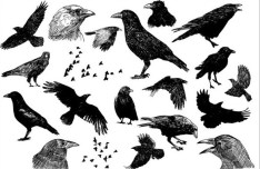 Set Of Black Hand-Drawn Birds Vector Illustration
