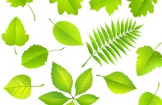 Clean Green Leaves Vector 02