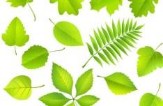 Clean Green Leaves Vector 02