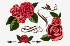 Classical Hand-Drawn Vector Rose 01