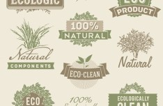 Vector Vintage Natural and ECO Concept Badges and Labels