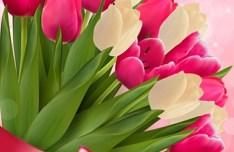 Beautiful Tulip Card Cover Design Template Vector 04
