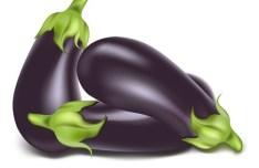 Vector Fresh Eggplants
